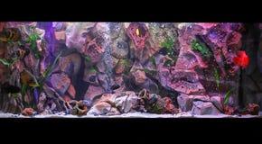 Zoetwater aquarium stock afbeeldingen