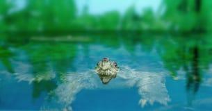 Zoetwater exotische schildpadden Matamata stock foto