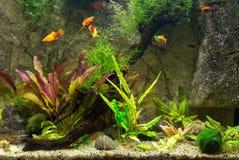 Zoetwater groen aquarium stock fotografie