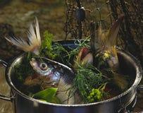 Zoetwater vissen Stock Foto's