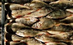 Zoetwaterdievissenvoorn en toppositie op het Roken in het rookhok wordt voorbereid stock foto