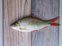 Zoetwatervissen op houten vloeren stock afbeelding