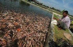 Zoetwatervissenkwekers Royalty-vrije Stock Afbeelding