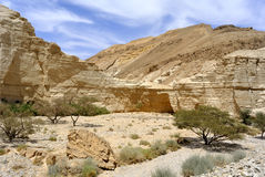 Zohar wadi in Judea desert. Stock Photo