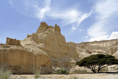 Zoharvesting in Judea-woestijn. stock afbeelding