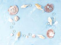 Zombe acima com quadro da concha do mar no fundo da pedra azul, shell de vieira, espaço da cópia Conceito do verão do feriado pel Imagens de Stock
