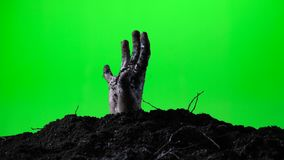 Zombie hand emerging from the ground grave. Halloween concept. Green screen. 013