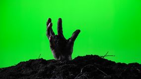 Zombie hand emerging from the ground grave. Halloween concept. Green screen. 014