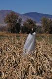 Zombie Scarecrow Stock Photography