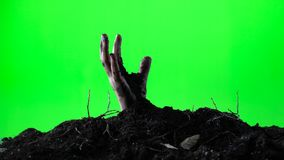 Zombie woman hand emerging from the ground grave. Halloween concept. Green screen. 002