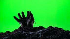 Zombiehand, die vom Boden auftaucht Grüner Bildschirm 006 stock video footage