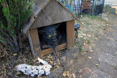 Zombiejagdhund im Haus Stockbilder