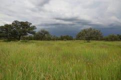 Zomer in Namibië Royalty-vrije Stock Foto's