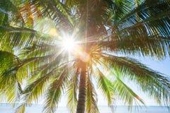 Zomer, Zonnestraal die door bladeren en takken van cocon glanzen royalty-vrije stock fotografie