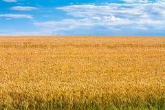 Zomerlandschap - tarwegebied Stock Fotografie
