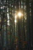Zon achter bomen Royalty-vrije Stock Foto's