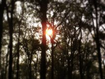 Zon achter Bomen stock fotografie