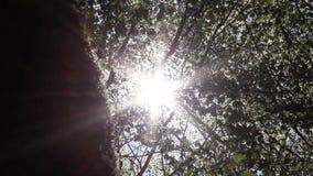 Zon achter bomen, wind en weerspiegelingen van lichten stock videobeelden