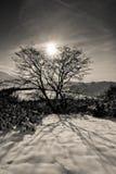 Zon achter de boom Stock Afbeeldingen