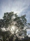 Zon achter een boom Stock Afbeelding