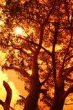 Zon achter een grote boom Stock Foto's