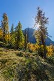Zon achter gouden sparren in de herfst in alpiene bergen, blauwe sk royalty-vrije stock afbeeldingen