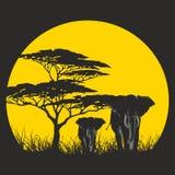 ZON AFRIKA Royalty-vrije Stock Fotografie