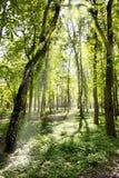 Zon in bos stock foto