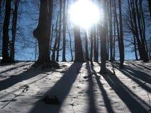 Zon in de bomen royalty-vrije stock afbeelding