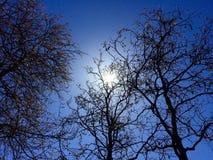 Zon in de bomen royalty-vrije stock foto