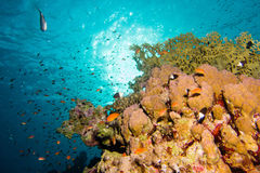 Zon in de koraaltuin stock foto's