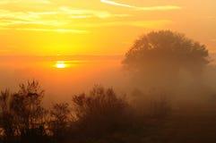 Zon in de mist Stock Foto's