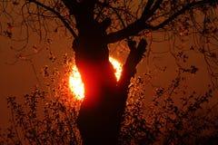 Zon die achter boom in Noordelijk Manitoba plaatst Stock Foto's