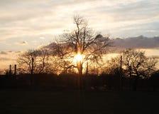 Zon die achter een winterse treescape plaatst stock fotografie