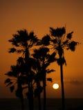 Zon die bij het strand Los Angelos plaatst van Venetië stock fotografie