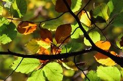 Zon die in de bladeren nadenken Stock Fotografie