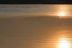 Zon die in de oppervlakte van het water nadenken Stock Foto