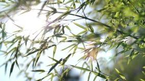 Zon die door bamboebladeren glanzen stock footage