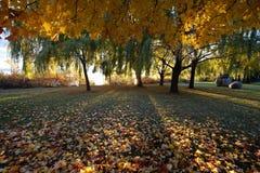 Zon die door bomen in de herfst glanzen Royalty-vrije Stock Afbeelding