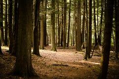 Zon die door bomen glanst Royalty-vrije Stock Fotografie