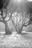 Zon die door bomen glanst Stock Foto's