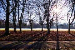 Zon die door bomen stromen, uckfield, Oost-Sussex Royalty-vrije Stock Foto's