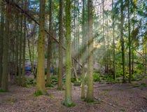 Zon die door bomen tijdens de lente in Gothenburg Zweden piepen royalty-vrije stock afbeelding