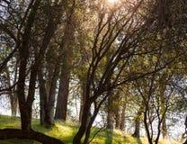 Zon die door de bomen glanst royalty-vrije stock fotografie
