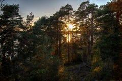 Zon die door de bomen glanst Royalty-vrije Stock Foto's