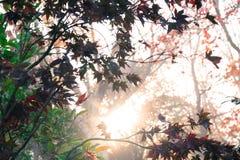 Zon die door de herfstbladeren glanzen in een bos in daling Stock Afbeelding