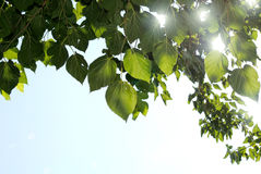 Zon die door de Mediterrane bladeren fonkelt Stock Foto's