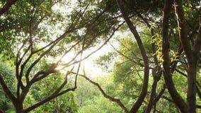 Zon die door grote boom glanzen stock videobeelden