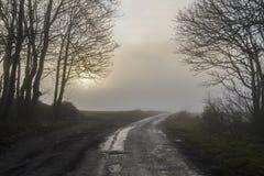 Zon die door mist en bomen gluren Royalty-vrije Stock Afbeeldingen