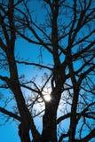 Zon die door onvruchtbare eiken die boom gluren met ijs wordt behandeld Stock Afbeeldingen